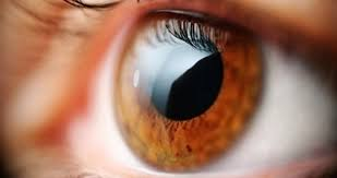 Des lentilles télescopiques et cellules photovoltaïques contre la cécité