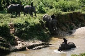 """Indonésie: des """"éco-guerriers"""" à dos d'éléphants pour protéger forêts et espèces en danger"""