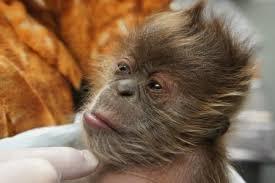 Un riche couple d'Indiens décide de léguer toute sa fortune à son singe