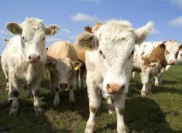 Des barrières intelligentes pour garder les troupeaux