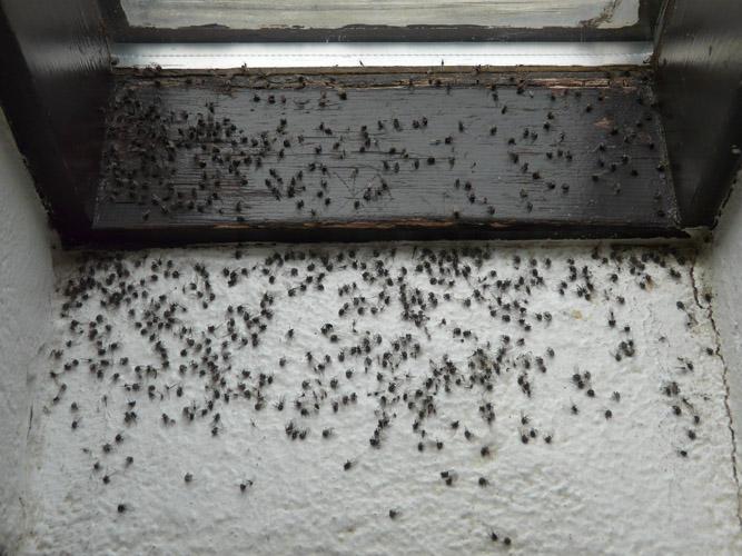 teva i uta la mouche des terreaux est arriv e mataiea. Black Bedroom Furniture Sets. Home Design Ideas