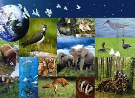 """""""La biodiversité est un capital à préserver, une source d'emplois"""""""