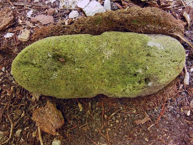 Une ancre de basalte découverte dans la cour d'un marae.