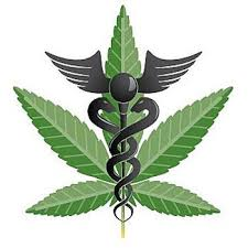 Chili : première récolte de cannabis autorisé à des fins thérapeutiques