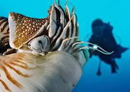 Palau, destination toujours prisée des plongeurs japonais