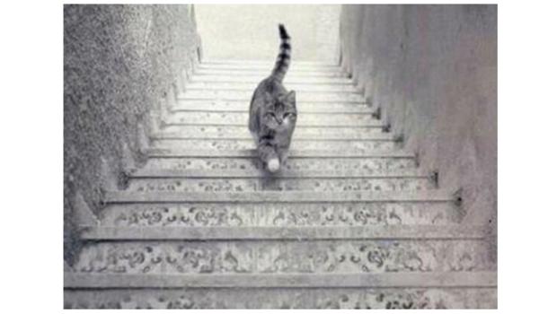 PHOTO - Est-ce que ce chat monte ou descend les escaliers ?