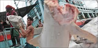 Pêche illicite: la Thaïlande pourrait perdre 1 milliard de dollars en cas de sanctions de l'UE
