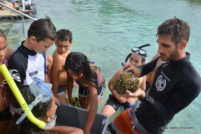 Préparation des boutures de corail.