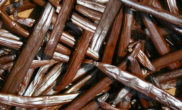 Le conservatoire de vanilliers polynésiens obtient un label du Centre de Ressources Biologiques