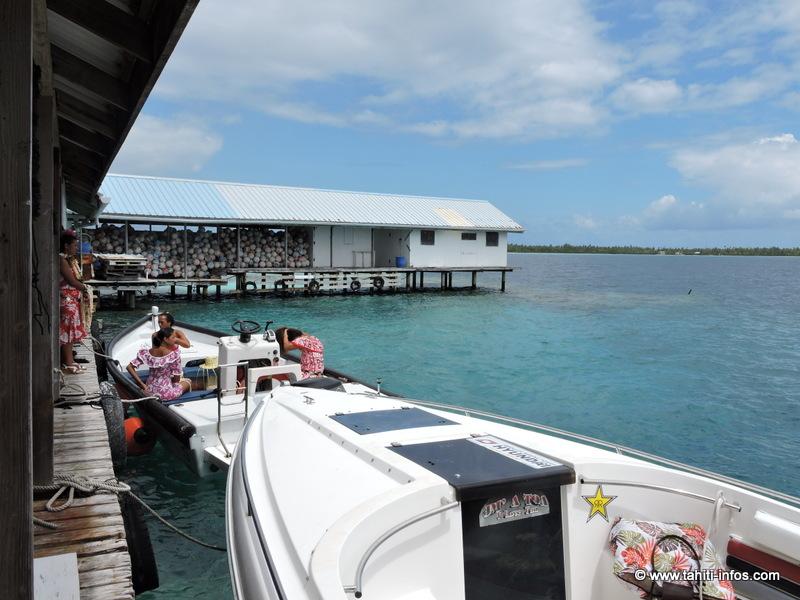 La perle de Tahiti bientôt confrontée à la concurrence chinoise
