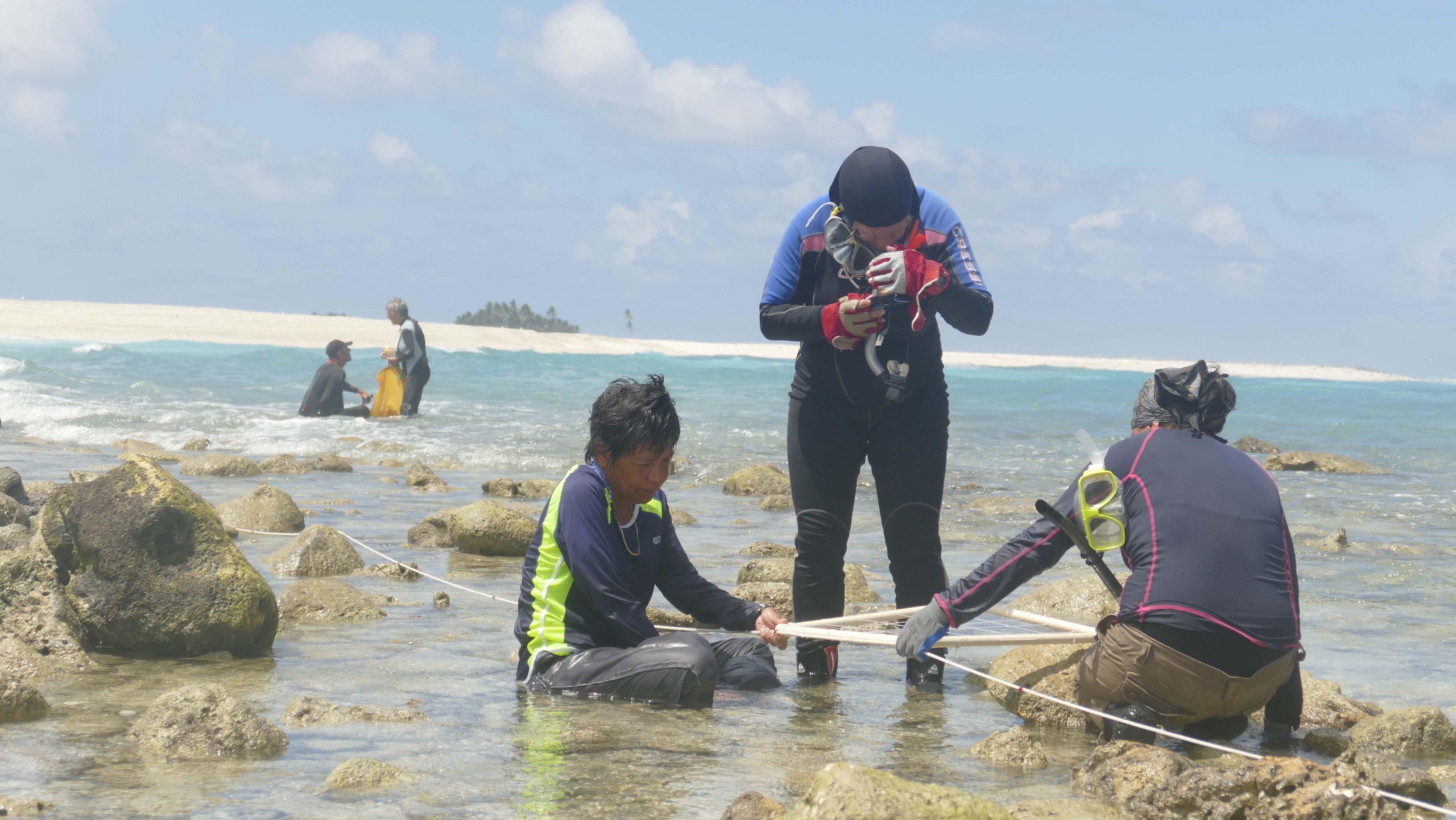 Pendant 14 jours, les biologistes marins ont collecté et identifié des espèces sur le platier corallien.