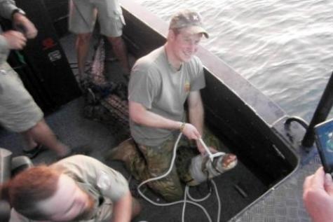 Le Prince Harry a aidé à capturer un crocodile lors de son récent voyage en Australie, des responsables précisant samedi qu'il avait saisi un animal de 3,1 mètres.