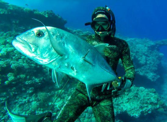 Une carangue de grosse taille. Le paihere devient ensuite Uruati avec l'âge.
