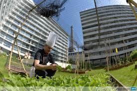 Sur les toits de Paris, des chefs cuisiniers plantent leurs potagers