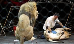 Mexique : les cirques ne pourront plus utiliser d'animaux sauvages