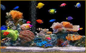 Retard dans la construction d'un aquarium géant au Brésil: 10.000 poissons meurent