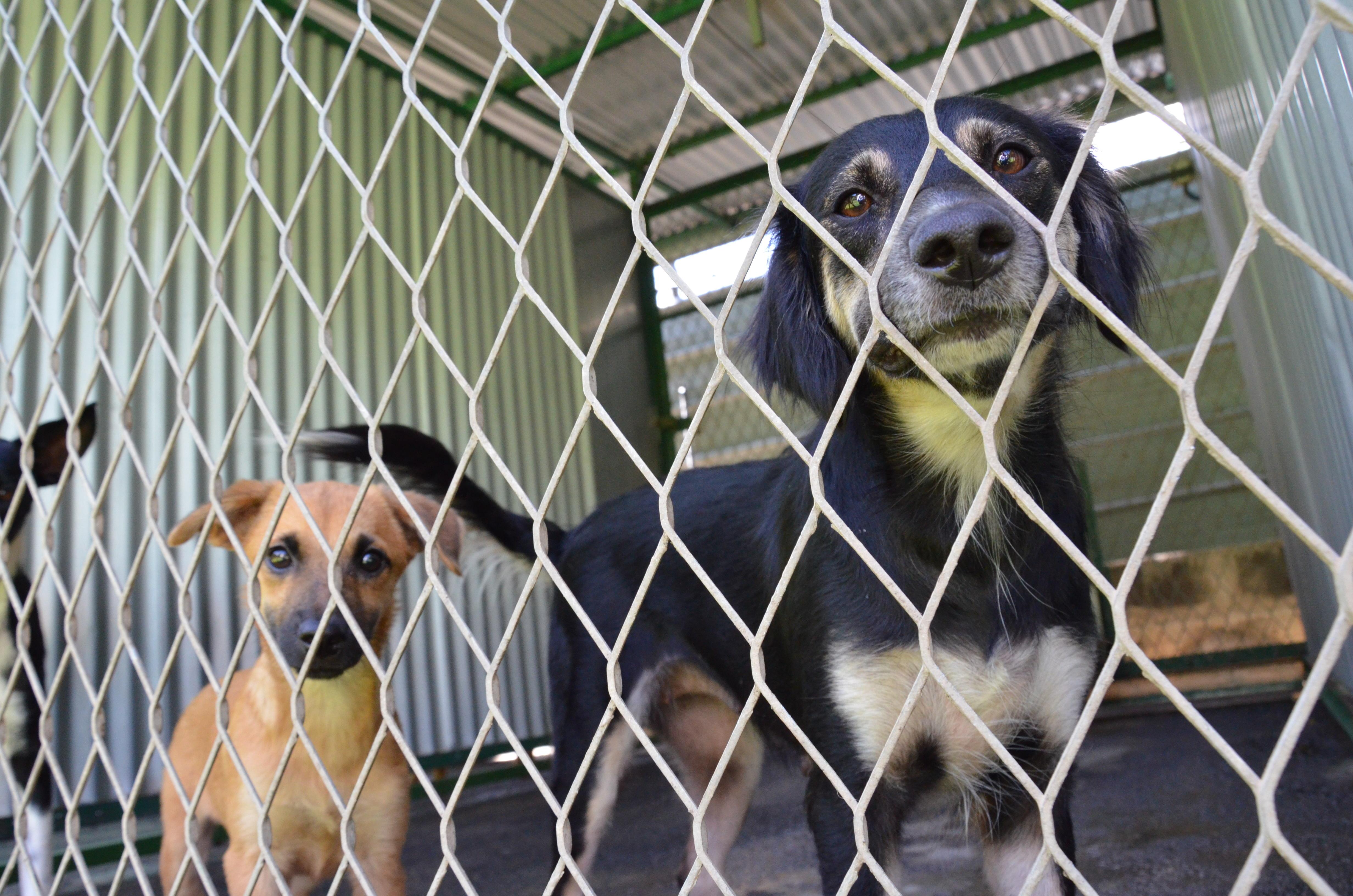 Une fourrière et un incinérateur pour les chiens errants à Punaauia