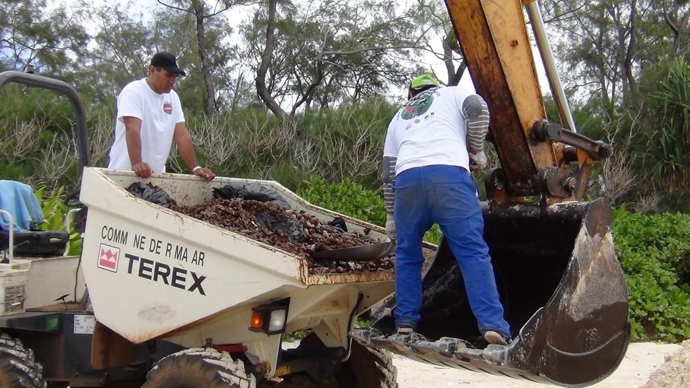 Plusieurs tonnes d'escargots géants ont été ramassées mercredi dernier.