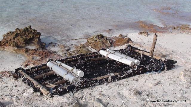 Un DCP dérivant échoué sur l'atoll de Rangiroa