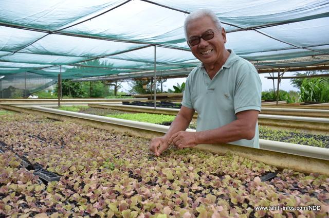 La pépinière de salade à Vairao
