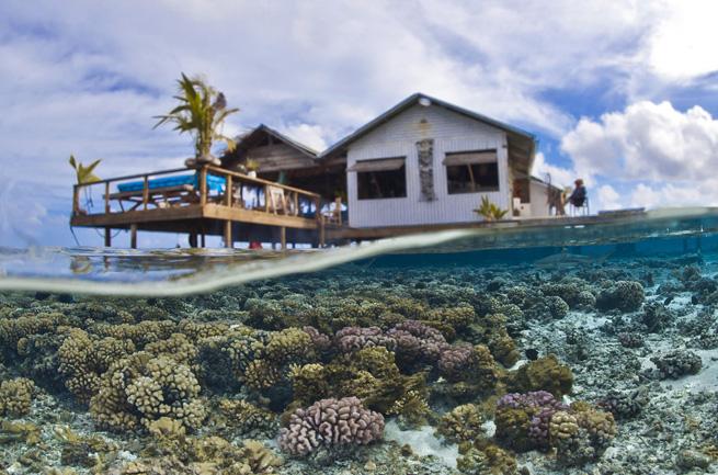 Dans les îles polynésiennes comme ici à Fakarava, avant la montée des eaux, les effets du réchauffement climatiques devraient se faire sentir sur la santé du corail avec une accélération des épisodes de blanchiment du récif corallien. Or, le corail est à la fois un lieu important de vie dans les lagons et de protection des rivages contre la houle (Crédit photo : CNRS-Photothèque T.Vignaud).