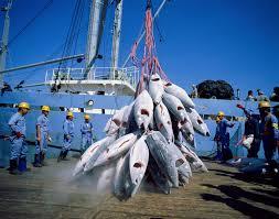 Pêche au thon : Nauru s'en prend aux transbordements illégaux