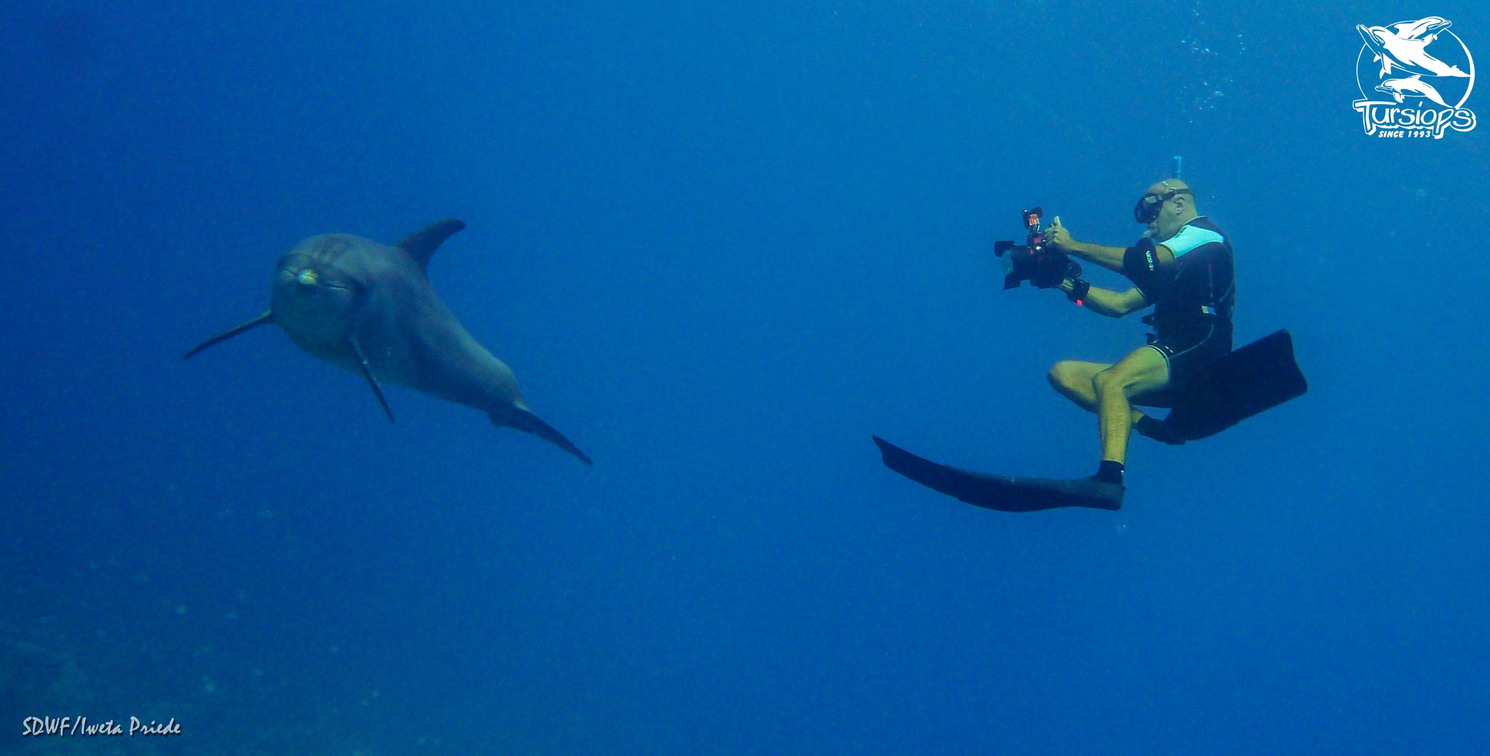 Éric Demay, l'homme qui murmurait à l'oreille des dauphins