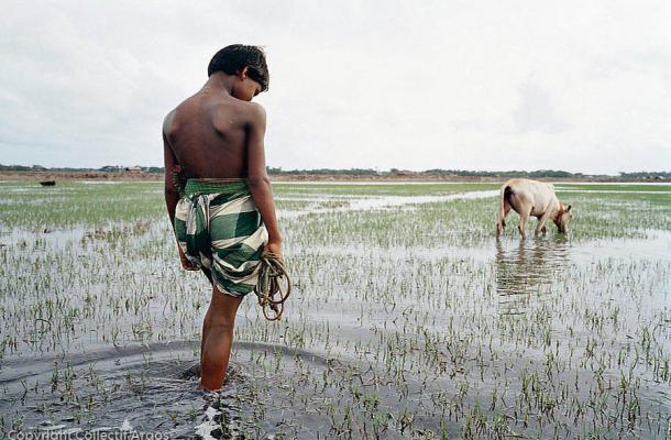 Réfugiés environnementaux : la commission néo-zélandaise des droits humains demande un accroissement des quotas