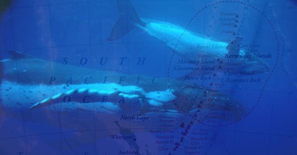 Pacifique: La Nouvelle-Zélande crée un sanctuaire marin grand comme la France