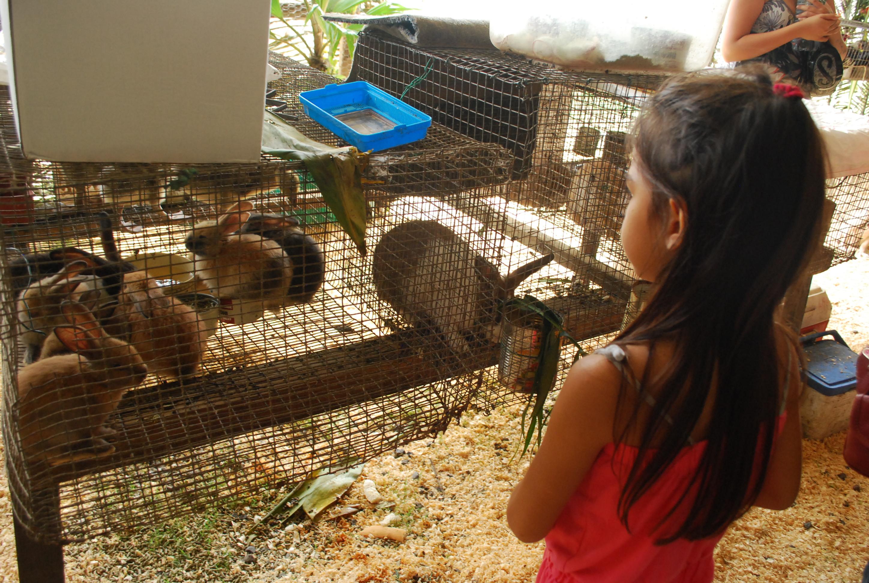 """Journal des enfants: """"Prépare ta visite à la Foire agricole"""""""