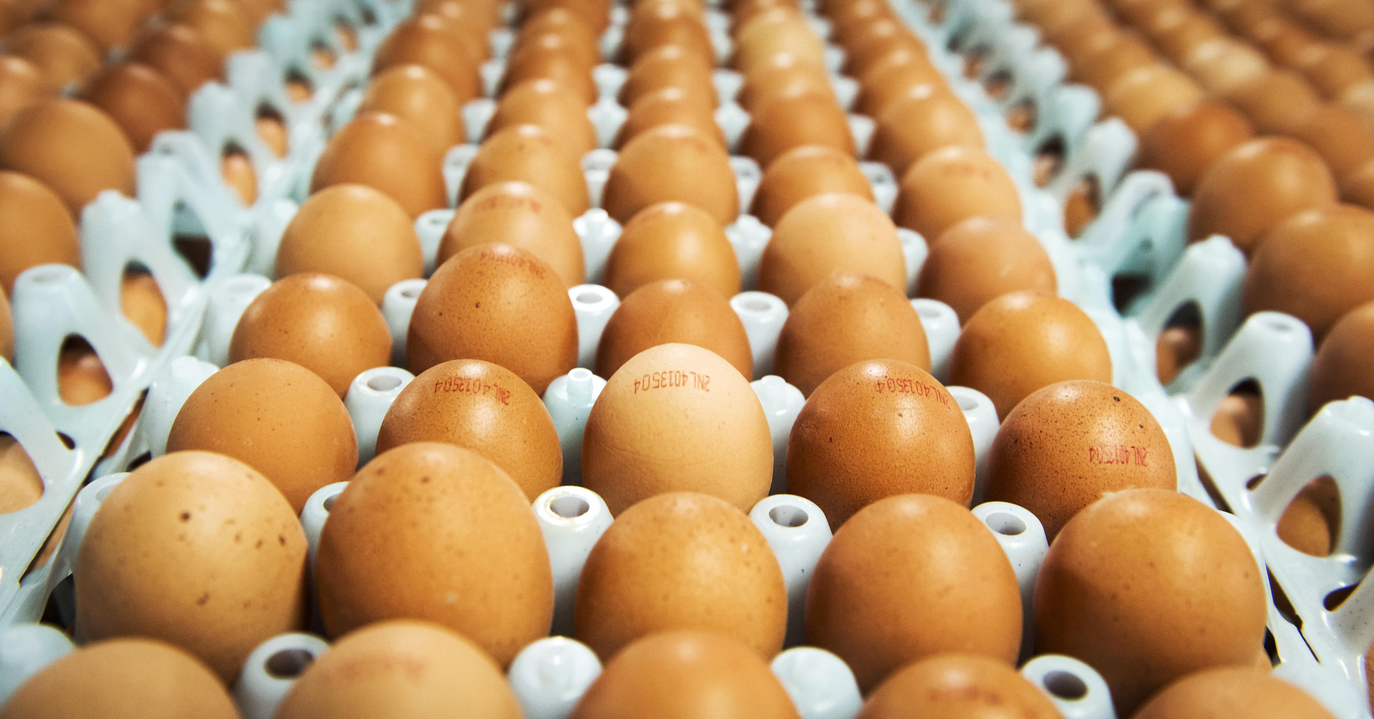 Un éleveur de poules pondeuses obtient d'être indemnisé par le Pays