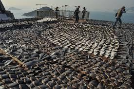 Les océans menacés par la pêche illégale et industrielle