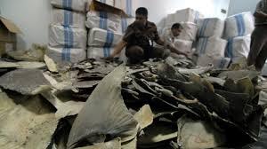 Indonésie: 3.000 nageoires de requins en partance pour Hong Kong confisquées