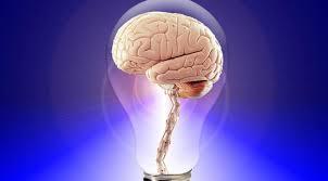 Un gros cerveau ne rend pas plus intelligent