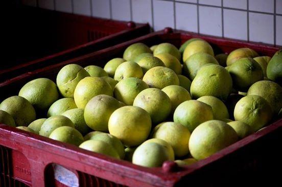 Aucun pamplemousse livré depuis le début de l'année à l'usine de jus de fruits de Moorea