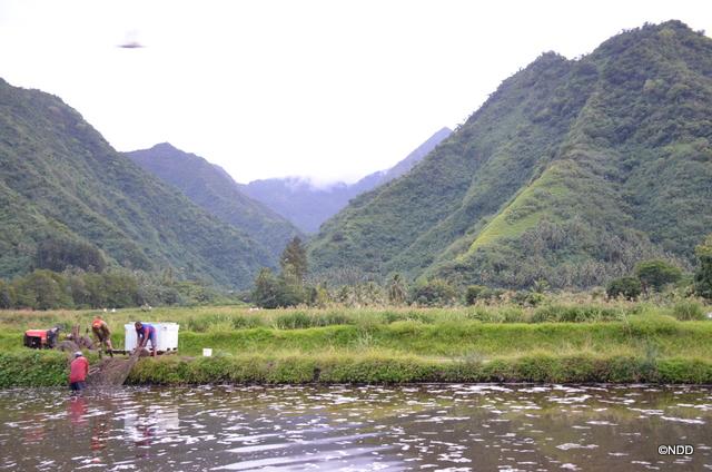 L'aquaculture, filière d'avenir pour Tahiti ?