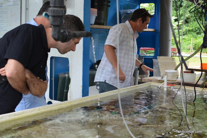 Découverte des boutures de corail au Criobe de Moorea pendant une visite samedi après-midi, après avoir rencontré la Richard B. Gump Moorea Field Station de Berkeley, également situé à Moorea.