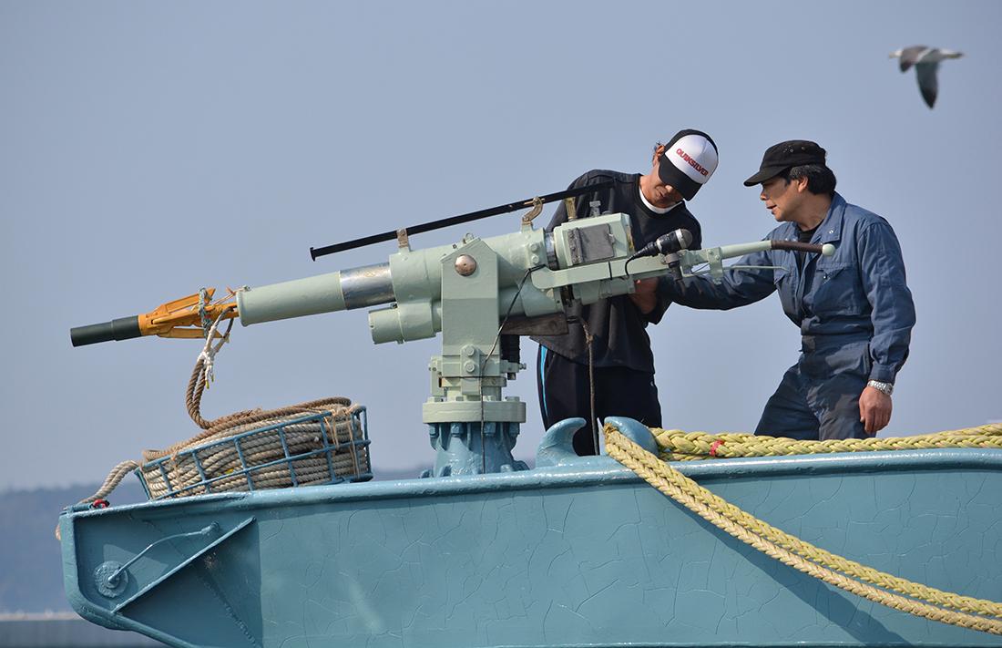 Chasse à la baleine: une société japonaise condamnée à un million de dollars australiens d'amende