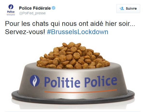 """Opérations antiterroristes: la police belge offre des croquettes aux chats qui """"l'ont aidée"""""""