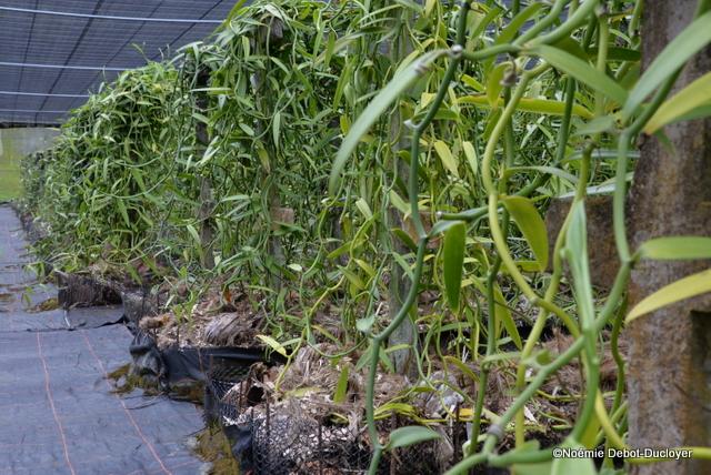 """Les ombrières sont entourées de filets """"insect proof"""", ainsi les parasites attaquent moins les cultures."""