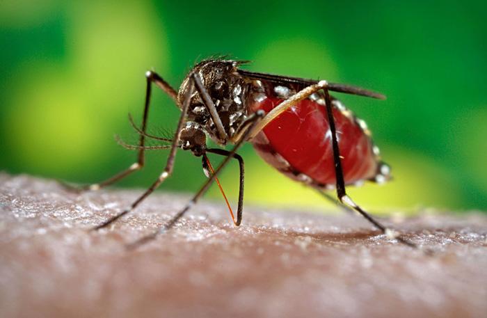 18 cas de malformations cérébrales congénitales ont été répertoriées en Polynésie française en 2014 et 2015 en lien avec le virus du Zika ayant atteint la mère durant la grossesse.
