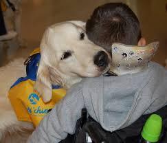 Poils doux et aboiements pour accompagner des enfants polyhandicapés vers le mieux-être