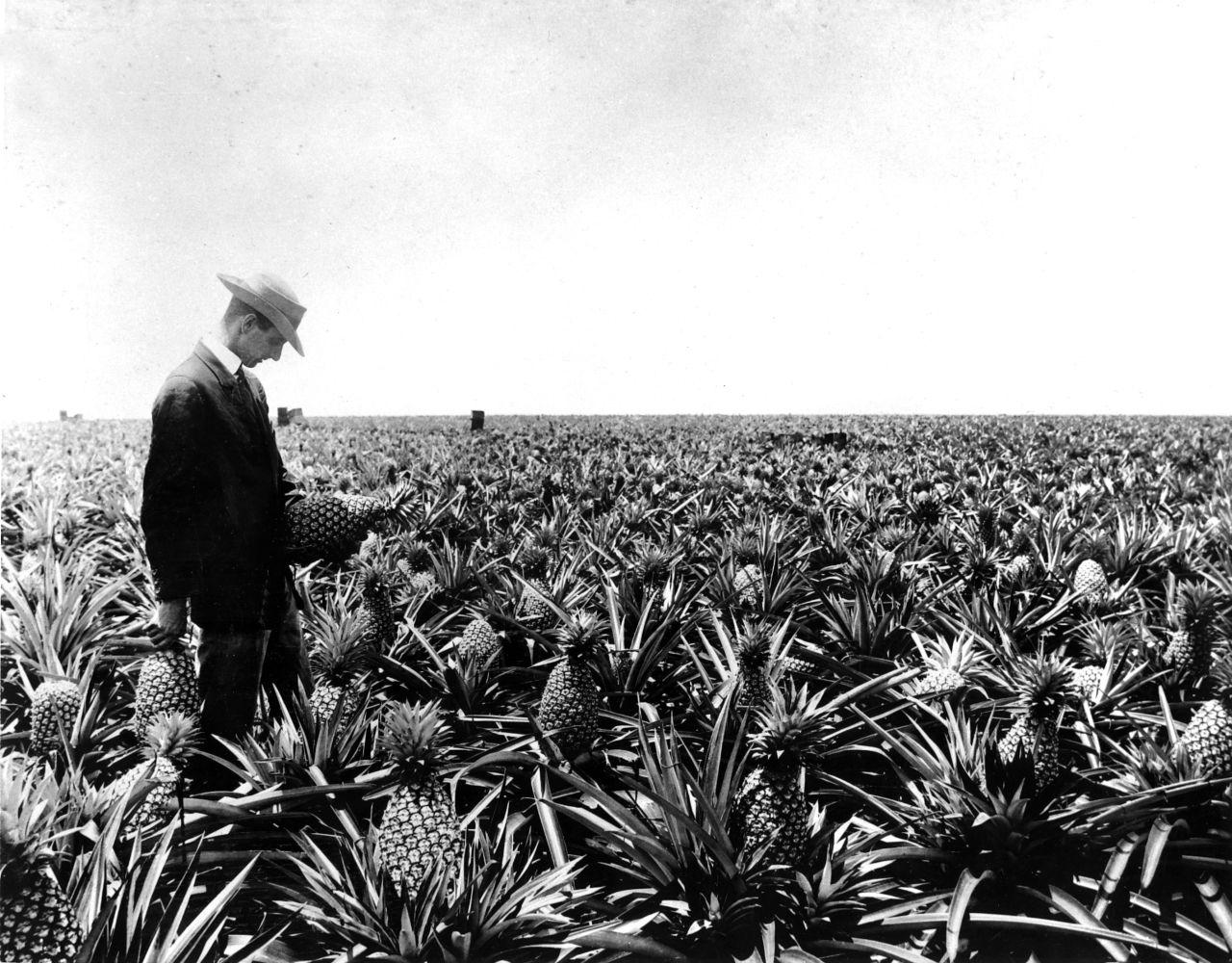 James Dole dans un de ses champs d'ananas à Hawaii.