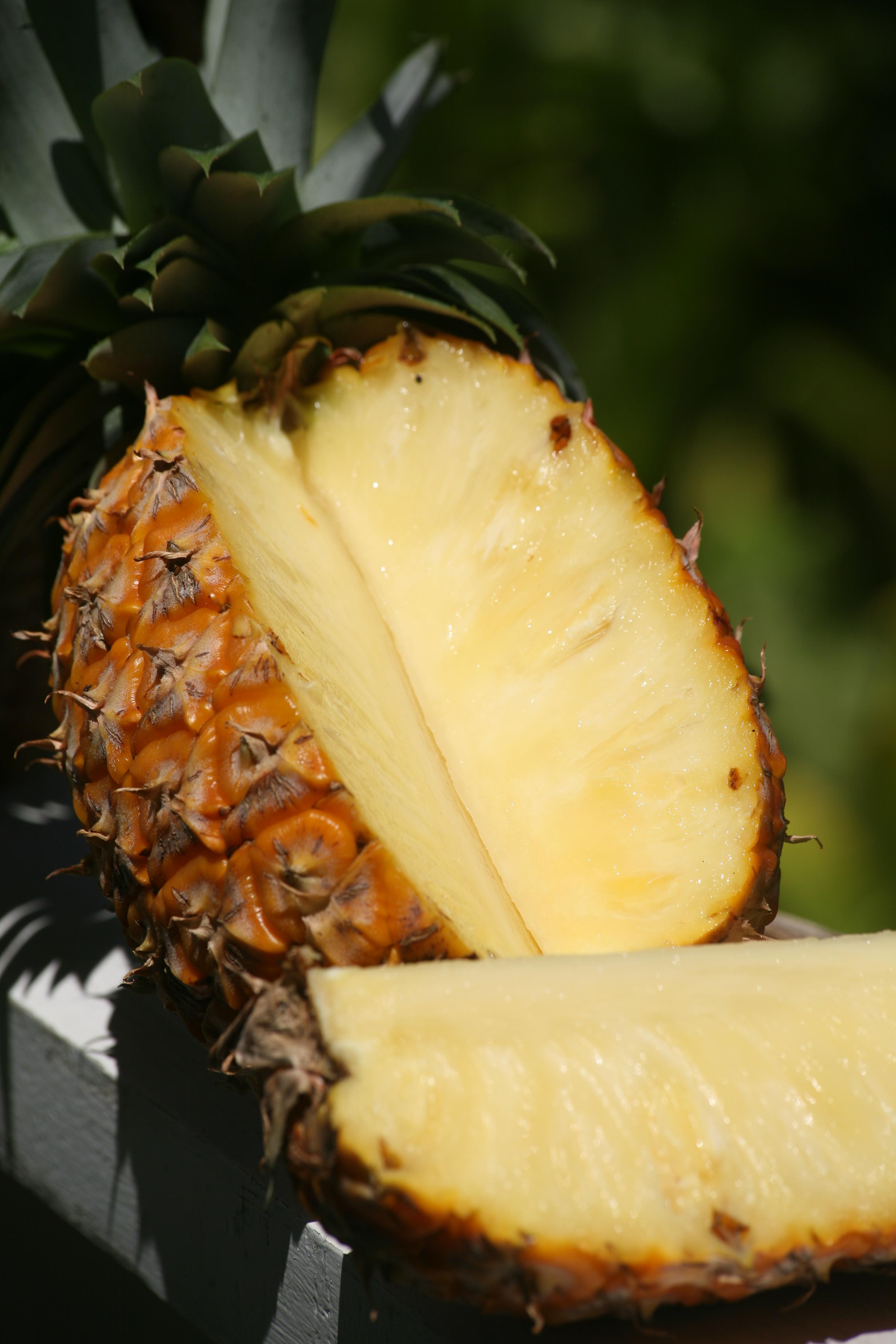 """Gros plan sur le """"roi des fruits"""", la variété Smooth Cayenne de Ananas comosus, la plus cultivée au monde."""