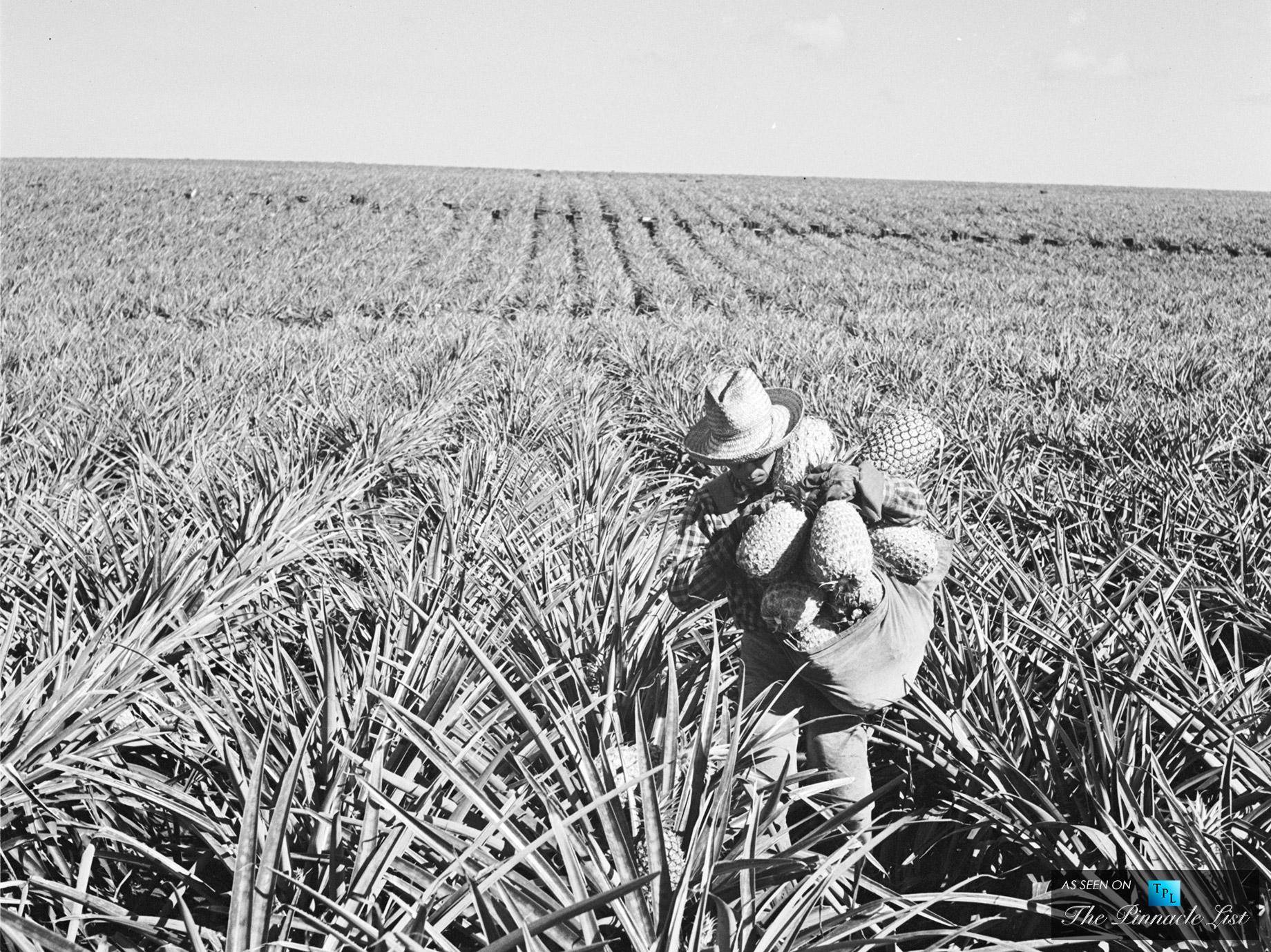 Avec l'achat de l'île de Lanai, Dole s'offrit 80 km2 d'ananas et plus de 75 % de la production mondiale !