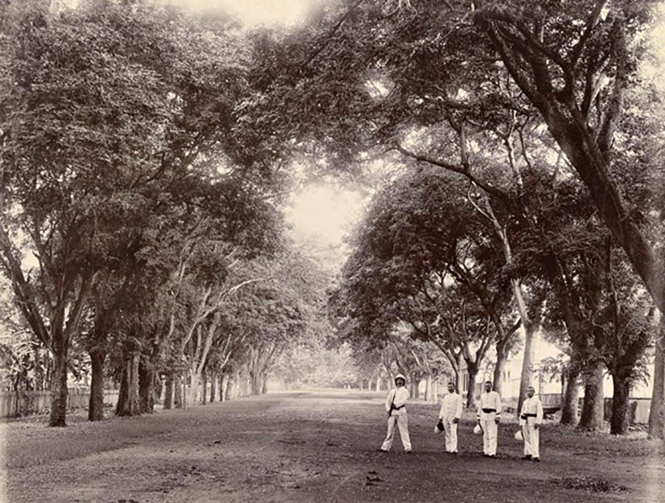 L'avenue Bruat conduisant à Sainte Amélie en 1900