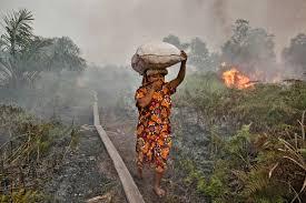 Indonésie: les incendies de forêts vont coûter 1,9% du PIB (Banque mondiale)