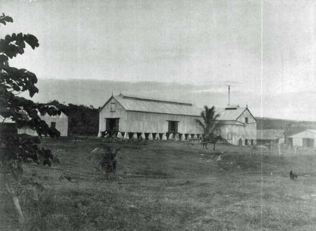 L'usine de préparation du kapok, destiné à fabriquer coussins et matelas.