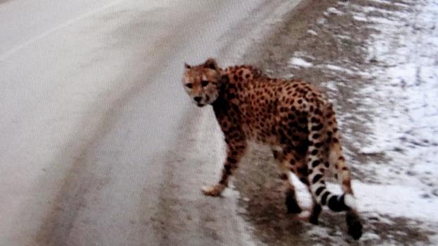 Une photo de l'animal prise par un motoriste canadien