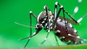 """Virus Zika : la Guyane """"en phase de pré-épidémie"""" selon le directeur de l'ARS"""